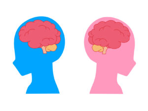男女脳のイラスト