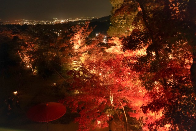 竈門神社 紅葉 夜景